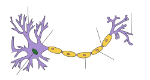 250px-Neuron_Hand-tuned.svg