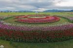 Skagit-Valley-Tulip-Festival-tulipanes-RoozenGaarde (1)