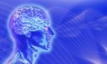 Cerebro Paralelo