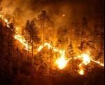 incendios-devastan-hectareas-bosques-espana_1_1128408