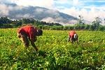 Agricultores_chirgüeños