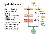 Lipid+Metabolism+Lipid+molecules+contain+carbon,+hydrogen,+and+oxygen+in+different+proportions+than+carbohydrates.
