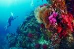 best-dive-spots-thailand-LEAD