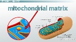 mitochondrial-matrix-definition-and-function-thumb_114262
