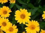 YellowFlowersEg1