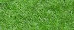 GrassTextEg1