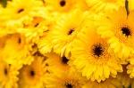 YellowFlowersEg2