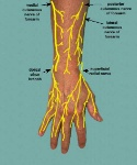 dorsalcutnerforearm