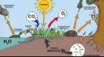 ecosistema-min-e1518787979795