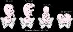GYN_position_presentation_fetus_b_es