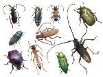 insetti01b