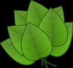 leaves-32261_960_720