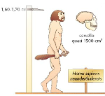 nenaderthalensis