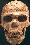 homo-sapiens-arcaico