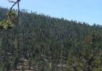 Figura-86-Panoramica-del-bosque-de-oyamel