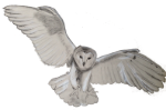 flying-barn-owl-artist-SusanPowers-1