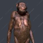C0388056-Australopithecus_sediba_female,_illustration