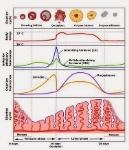Siklus Menstruasi