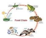 food chaing