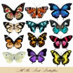 coloured-butterflies-collection_1215-48