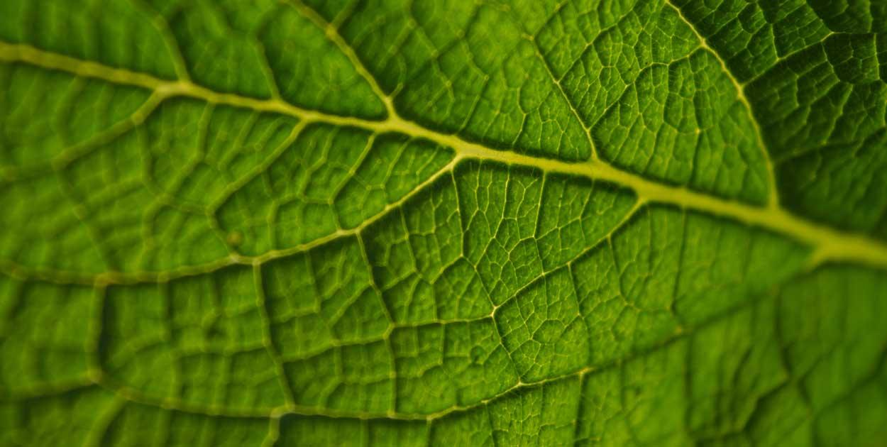 leaf_bkg