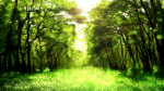 forest-png-hd-images-spring-forest-by-vronde-spring-forest-by-vronde-1600