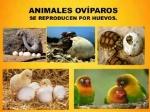ejemplos_de_animales_oviparos_para_ninos_2978_600