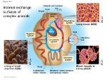 Internal+exchange+surfaces+of+complex+animals