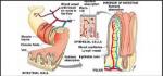 absorption in small intestine