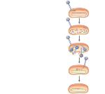 BacterialTransduction