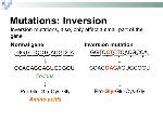 gene-mutations-8-638