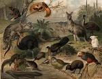 300px-Australisk_fauna,_Nordisk_familjebok1