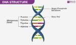 DNA-Structure1
