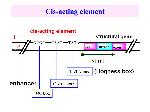 Cis-acting+element