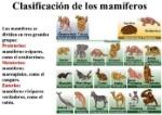 clasificacion-animales-mamiferos