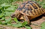 alimentazione-tartaruga