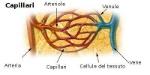 Illu_capillary-IT