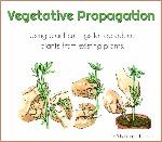 Vegetative-Propagation-Plant-Cuttings-858x750