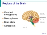 Regions+of+the+Brain+Cerebral+hemispheres+Diencephalon+Brain+stem