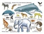 Facts-About-Mammals-Characteristics-of-Mammals-Classification-of-Mammals