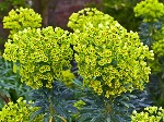grow-euphorbia-shutterstock