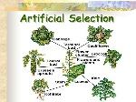 Artificial+Selection