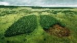 Por-Qué-es-Tan-Grave-la-Deforestación-para-el-Medio-Ambiente
