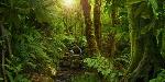 selva-e1535405554134