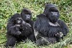 Fotos-de-familias-animales-muy-tiernas-y-bonitas-12