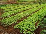 cultivo-familias-rotaciones_@mundoikos