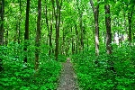 depositphotos_51777489-stock-photo-nature-forest