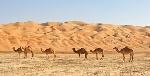 desierto-de-arabia
