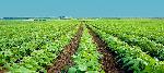 La-agricultura-andaluza-apuesta-por-la-eficiencia-del-agua-en-los-cultivos-hortofrutícolas-