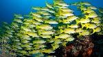 peces-bancos-maldivas_TINIMA20120620_0459_5